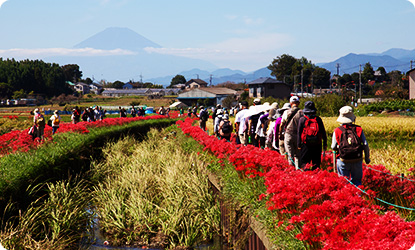 Koidegawa River Red Spider Lily Festival